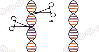 У США спробують лікувати ВІЛ за допомогою редагування ДНК