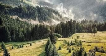 Исчезновение грибников на Прикарпатье: их до сих пор не нашли