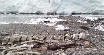"""Вчені розгадали секрети кита, рештки якого роками лежать біля станції """"Вернадський"""""""