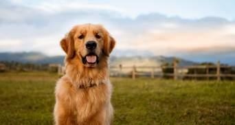 Як зробити життя собаки здоровішим та щасливішим: 5 дієвих методів