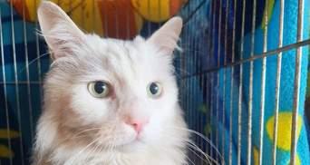 Кияни всиновили 133 коти на виставці безпородних тварин: зворушливі фото