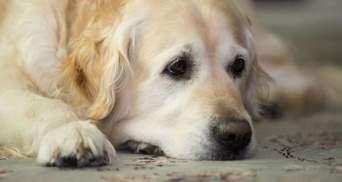 Лишив голодним під магазином, бо хотів спати: киян обурила історія про покинутого собаку