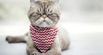 Через пандемію деякі кішки страждають небезпечним рівнем стресу: експерти пояснили, чому