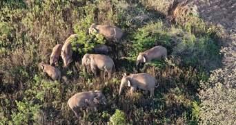 """Їдальня слонів: у Китаї створили """"фудкорт"""" для кочівних тварин"""