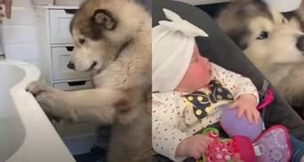 Як сім'я намагалася вмовити гігантського пса покупатися: курйозне відео