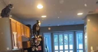 Пітбуль вважає себе котом: любить сидіти на холодильнику і не гавкає