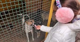 Неймовірний вчинок дівчинки з Дніпра: заради тварин відмовилась від Дня Народження