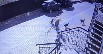 Стая собак набросилась на 8-летнего мальчика из Одессы: видео нападения на школьника