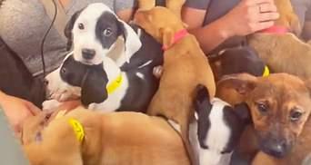 Идеальный полет: вирусное видео про самолет, полный собак, покоряет тикток