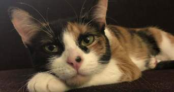 Кішка врятувала господарів від  небезпечного витоку газу: яка поведінка тварини допомогла сім'ї