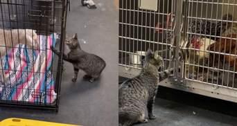 Кішка працює у ветеринарній клініці: які обов'язки у чотирилапої