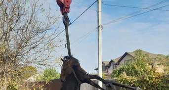 Конь упал в канализацию в Кривом Роге: беднягу тянули автокраном
