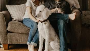 Неприємний запах та шерсть від пухнастих тварин: як можна очистити від цього домівку