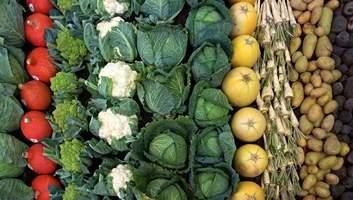 Враг вредителей немецкого качества: как легко, безопасно и надежно защитить свои растения
