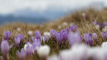 Яким буде початок весни в Україні: прогноз погоди на перші дні березня
