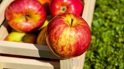 Урожай фруктів-2020: що загинуло і які будуть ціни