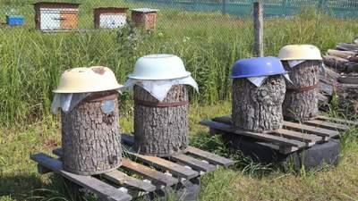 Медовый Спас: как отличить дикий мед от того, что с пасеки