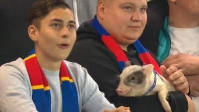 В России фанаты приволокли на футбольный матч настоящего поросенка: видео