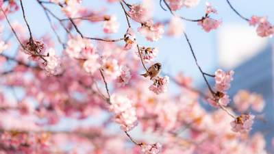 Выходные в апреле 2021: сколько будут отдыхать украинцы во втором месяце весны