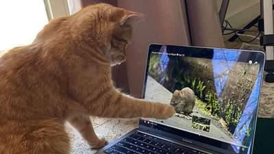 Сусідський кіт ходить в гості до жінки, щоб дивитися відео на ютубі: милі фото