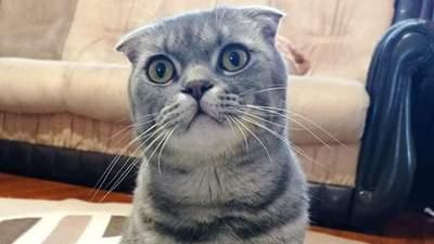 Ром избил ребенка и похитил кота: в Днепре дерзко ограбили дом – фото