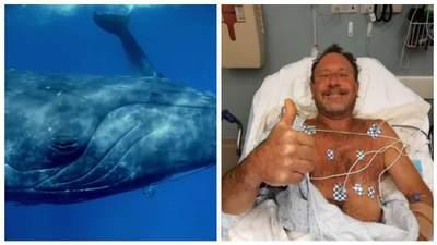 """""""Боже мой, я в кита пасти"""": в США горбатый кит проглотил мужчину"""