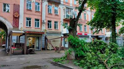 """У Полтаві дерево впало на літній майданчик кафе, ледь не """"накривши"""" людей: відео"""