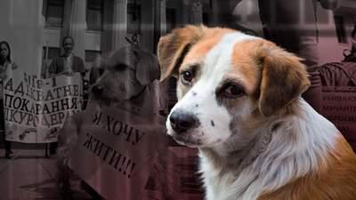 Выбрасывают из окон, бьют и отстреливают: как в Украине издеваются над животными