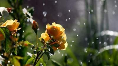 Прогноз погоды на 20 июня: будет до +31 градуса, однако и в дальнейшем с дождями