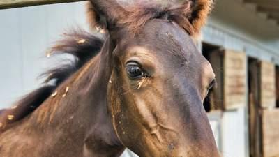 На Рівненщині кінь задушив батька 9 дітей, коли той провалився у боброву яму