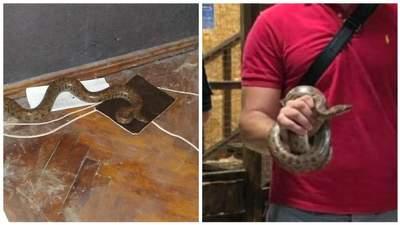 Попал в квартиру: в Харькове патрульные спасли редкого питона – фото