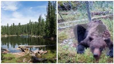 В России дикий медведь напал на туристическую группу: есть погибшие