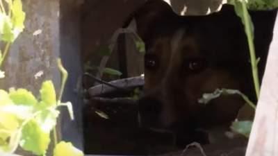 Рви їх на шматки, – у Сумах охоронець нацькував собак на чоловіка з 8-річною дочкою