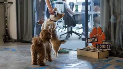 """Действительно дружественный офис: сегодня в Украине – ежегодная акция """"Возьми собаку на работу"""""""