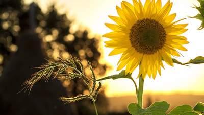 Прогноз погоды на 23 июля: в Украине снова будет солнечно и тепло