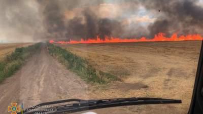На Днепропетровщине вспыхнул огромный пожар на пшеничных полях: фото