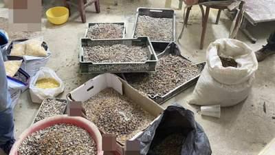 Поставляли в ОАЭ: на Волыни полиция разоблачила незаконную схему сбыта янтаря