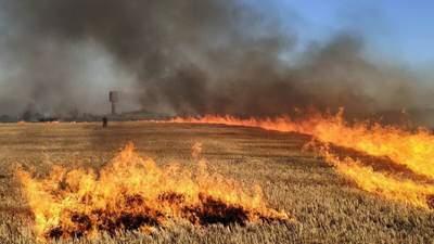 На Николаевщине огонь охватил пшеничное поле