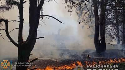 Пожар на острове Хортица: полиция проводит проверку