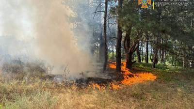 Пожар на Хортице: директор заповедника назвал вероятную версию возгорания