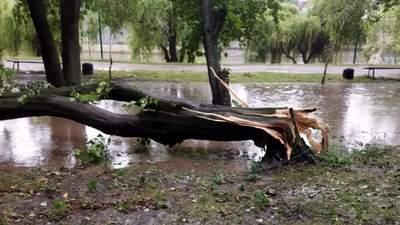 Раптова злива накрила Чернівці: затоплені вулиці й повалені дерева – фото, відео