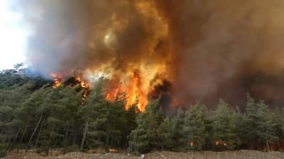Из-за масштабных пожаров в Греции пострадали 16 человек
