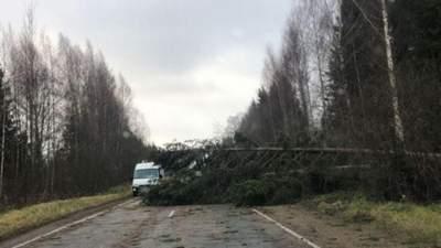Деревья падали как спички: по России пронесся смертоносный ураган-видео
