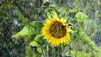 Прогноз погоды на 4 августа: фронты принесут в часть областей дожди с грозами
