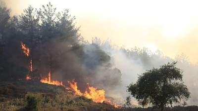Майже всі пожежі в Туреччині локалізували: Ердоган подякував Зеленському
