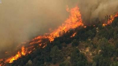 Албанию охватили масштабные лесные пожары: страна ожидает помощь из-за рубежа