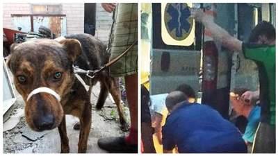 Раніше нікого не кусав, – волонтери розповіли про собаку, який загриз жінку у Запоріжжі