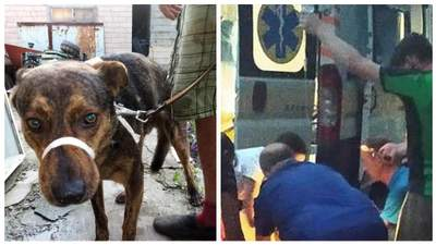 Раньше никого не кусал, – волонтеры рассказали о собаке, которая загрызла женщину в Запорожье