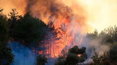 Огонь от лесных пожаров в Турции перекинулся на тепловую электростанцию: видео