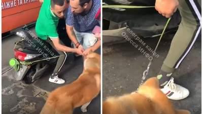 """""""Я так всегда делаю"""": в Одессе мужчина привязал собаку к мопеду и начал ездить"""
